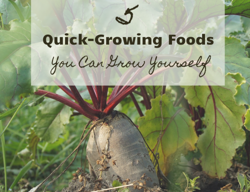 5 Quick-Growing Foods You Can Grow Yourself
