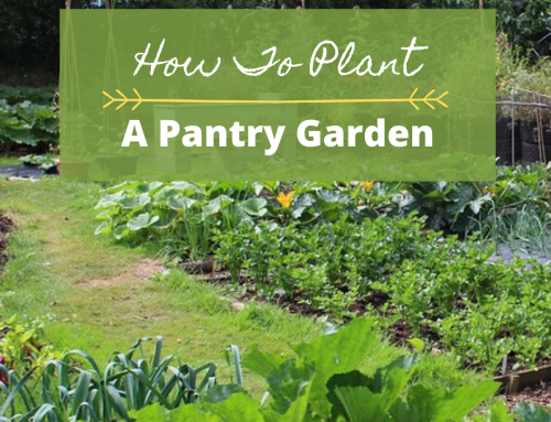 How To Plant A Pantry Garden