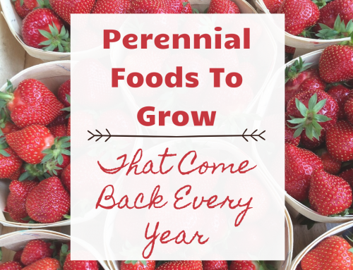 Perennial Foods To Grow That Come Back Every Year